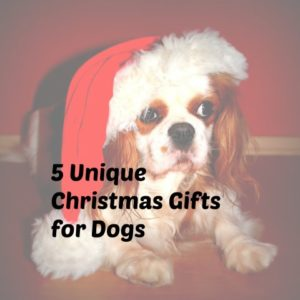 unique Christmas gifts for dogs